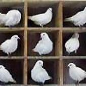pigeonholes, with pigeons in them